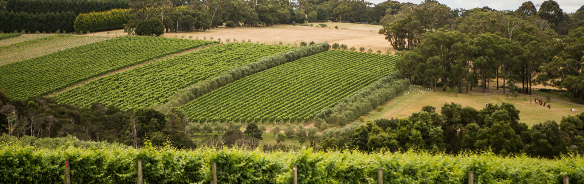 Australian Pinot Noir breaks out at the IPNC